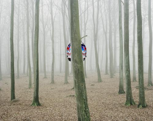 dan tree